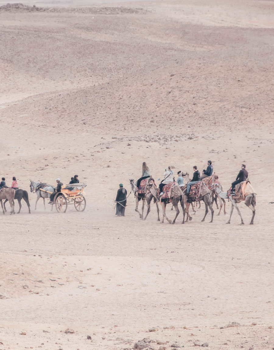 Meridian | Camel rides are a popular activity in the desert near the Great Pyramids outside of Cairo, Egypt.