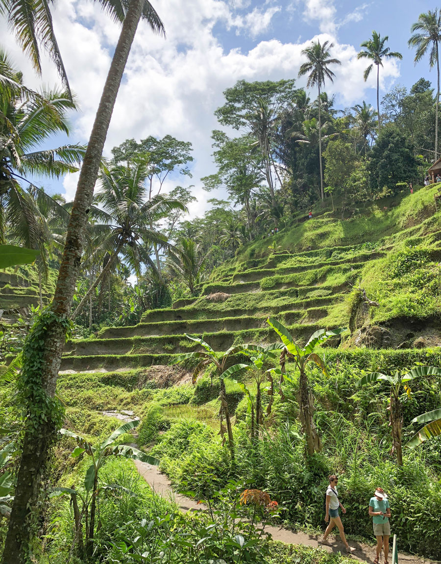 Meridian | We loved our time on the island of Bali, especially our visit to the Tegalalang Rice Terraces near Ubud.